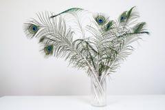 Pfau versieht im Vase auf weißer hölzerner Tabelle mit Federn Stockfoto