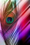 Pfauvater mit abstraktem mehrfarbigem schattiertem Hintergrund Auch im corel abgehobenen Betrag lizenzfreie abbildung