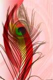 Pfauvater mit abstraktem Rotem und Weiß schattierte Hintergrund Auch im corel abgehobenen Betrag vektor abbildung