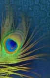 Pfauvater mit abstraktem Vektorblau schattierte Hintergrund Auch im corel abgehobenen Betrag Lizenzfreie Stockbilder