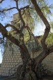 Pfeffer-Baum und Auftrag Bell Lizenzfreies Stockbild