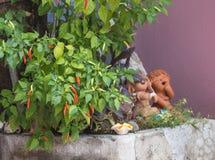 Pfeffer der roten Paprikas, Paprika, Paprika Lizenzfreie Stockfotografie