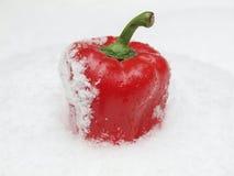 Pfeffer in einem Schnee Stockfoto