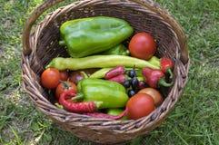 Pfeffer und Tomaten ernten im Weidenkorb, Frischgemüse, Bestandteile stockfotografie