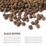 Pfefferkorn des schwarzen Pfeffers lokalisiert auf weißem Hintergrund Lizenzfreies Stockfoto