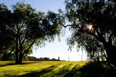 Pfefferkornbäume hintergrundbeleuchtet durch Sonne des frühen Morgens im Land lizenzfreies stockfoto