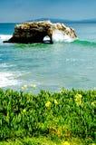 Pfeiffer state park. Photo taken at Julia Pfeiffer Burns state park on the California coast Royalty Free Stock Photos
