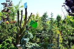 Pfeile im Gartenbau Lizenzfreies Stockfoto