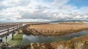 Pfeilspitzen-Sumpf Stockfoto