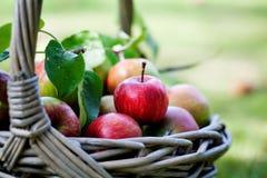 Äpfel im Korb Lizenzfreie Stockbilder