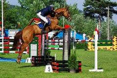 Pferd über Hürde Stockfotografie