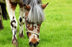 Pferd #10 Stockfotografie