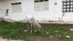 Pferd in Lizenzfreie Stockbilder