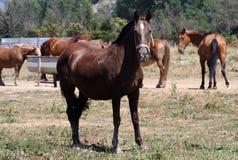 Pferd. Stockbild