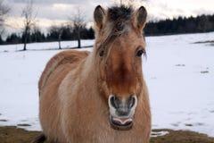 Pferd Lizenzfreie Stockfotografie