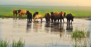 Pferd Lizenzfreie Stockfotos
