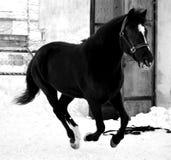 Pferd Lizenzfreies Stockbild