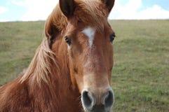 Pferd Lizenzfreies Stockfoto