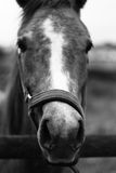 Pferd 3 Stockbild