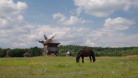 Pferd stock video