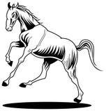 Pferd Stockbilder
