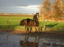 Pferd Stockfoto