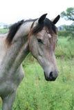 Pferd Stockfotografie