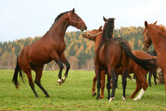 Pferd 7 Lizenzfreies Stockbild