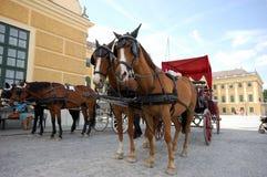 Pferd angetriebene Fahrerhäuser Lizenzfreies Stockfoto