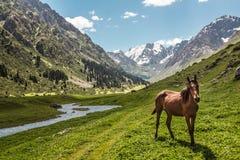 Pferd auf alpiner Lichtung Lizenzfreie Stockbilder