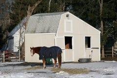 Pferd auf Bauernhof Lizenzfreie Stockbilder