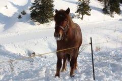 Pferd auf Bauernhof Stockbilder
