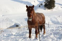 Pferd auf Bauernhof Stockfotos
