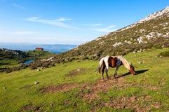 Pferd auf Berg Monsacro, mit der Kapelle des Magdalena-Hintergrundes stockbild