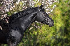Pferd auf Blütenbaum stockbilder