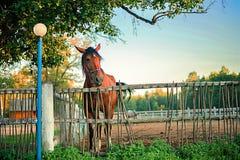Pferd auf dem Bauernhof stockfoto