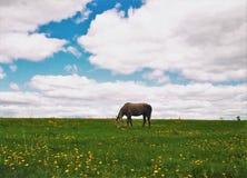 Pferd auf dem Feld Stockfoto
