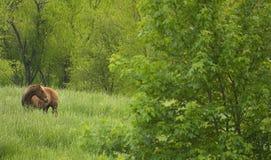 Pferd auf dem Gebiet Lizenzfreie Stockfotografie