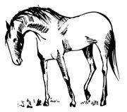 Pferd auf dem Gebiet Lizenzfreie Abbildung