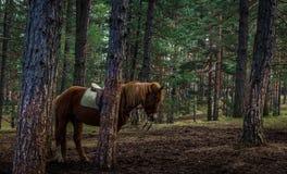 Pferd auf dem Gebiet Stockfoto