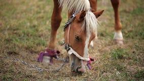 Pferd auf dem Gebiet stock footage