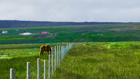 Pferd auf dem Gebiet, Nord-Island lizenzfreies stockfoto