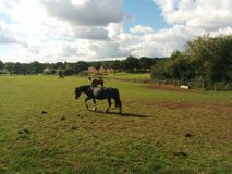 Pferd auf dem grünen Gras lizenzfreie stockfotos