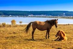 Pferd auf dem Grasland Lizenzfreies Stockfoto