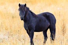 Pferd auf dem Herbstgebiet Lizenzfreies Stockbild