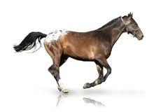 Pferd auf dem Lack-Läufer Stockbild