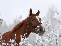 Pferd auf dem Namen der Jeday Uhren auf mir Stockbilder