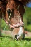 Pferd auf der Weide Stockfotos