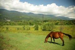 Pferd auf der Weide Lizenzfreie Stockfotos