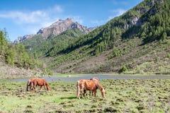 Pferd auf der Wiese innerhalb des Berges Lizenzfreies Stockbild